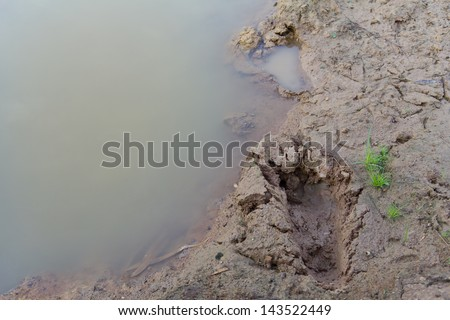 Traces of bare feet on the ground to walk on the muddy ground water - stock photo