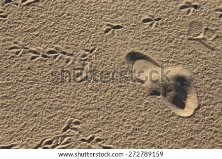 Traces of birds and humans in the sand.