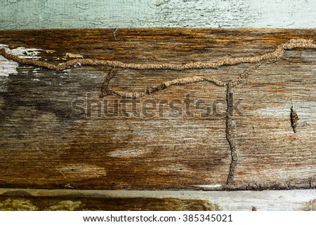 Traces of termites eat wood