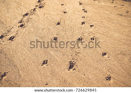 traces of wild animals on a sand/toned photo