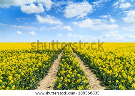 Traces on a rapeseed field - stock photo