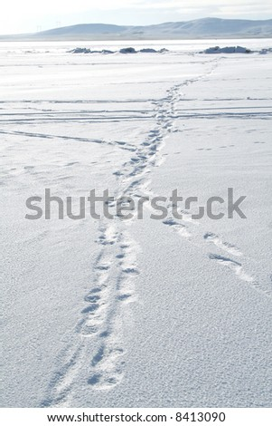 Traces on snow. Winter path - stock photo