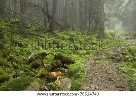 track in wilde forest in Carpathians - stock photo