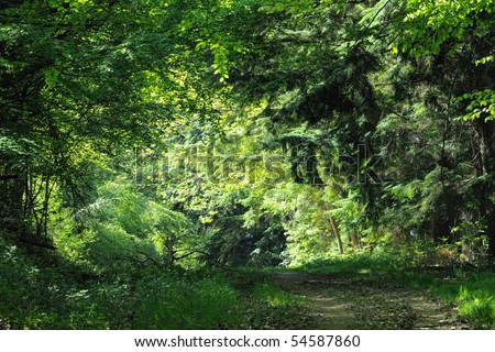 Track leading to an illuminated clearing in a dense, mixed, wood