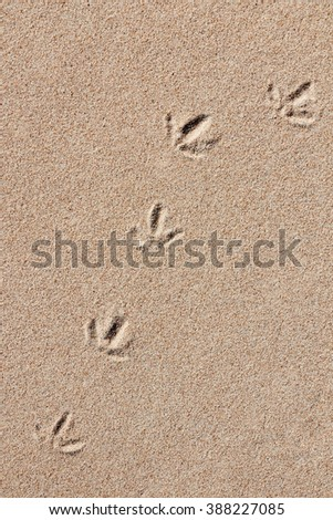 Track of a Seabird in the Sand
