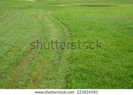 Track of mowing lawn in golf course landscape. - stock photo
