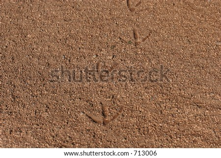 Tracks - stock photo