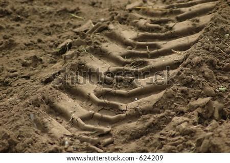 Amending Sandy Soil: ¿Qué es el suelo de arena y cómo mejorar el suelo arenoso