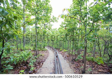 Tract on the mountain slope. With teak trees along both sides of the aisle.