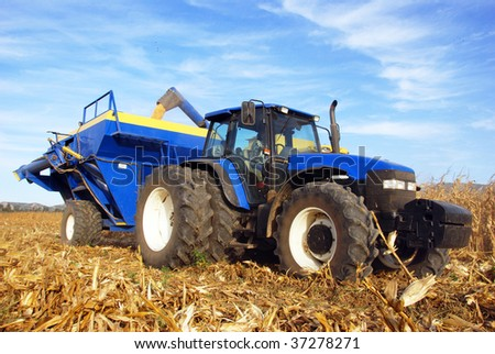 Tractor and trailer in a maize field on a farm during harvest time