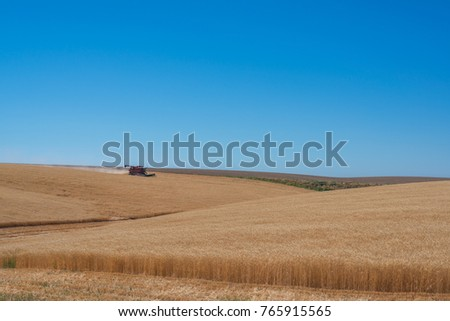 Tractor collecting wheat in a large field