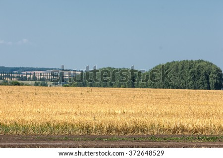 Tractor hauling a round bale an open field with blue sky. tractor unloads bales of hay in the field. Hay tractor on the field - stock photo
