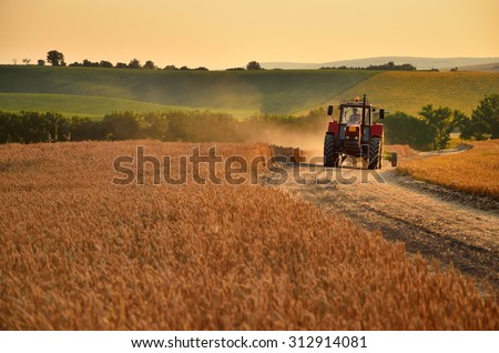 Tractor is going trough agriculture field full of gold wheat - stock photo
