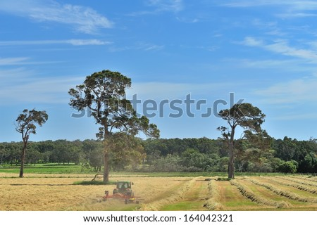 tractor making windrows of mown hay on australian farm - stock photo