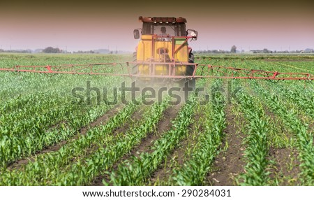 Tractor spraying a field of corn
