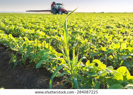 Tractor spraying soybean field  - stock photo