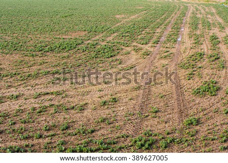 Tractor tire tracks in muddy field
