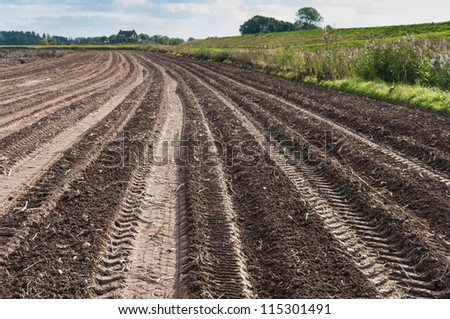Tractor tracks in a potato field just after harvesting. - stock photo
