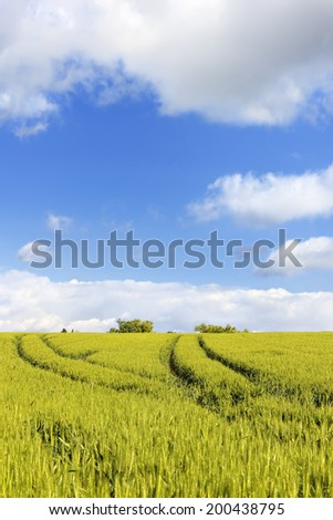 Tractor tracks through wheat fields in Rouhling, Moselle, Lorraine, France, Europe