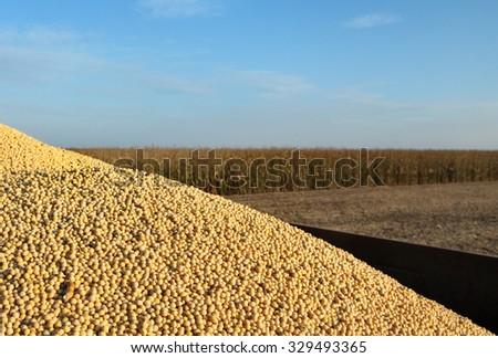 Tractor trailer with heap of soy bean after harvest in field - stock photo