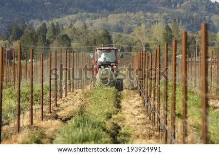 tractor using a air blast sprayer with a chemical  insecticide or fungicide in the vineyard of wine grape vines in Oregon - stock photo