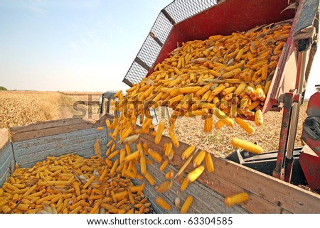 Tractor with agricultural machinery is harvesting corn at field - stock photo