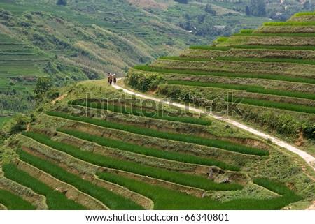 Traditional hill tribe farmers trek Sapa highland rice terraces - stock photo