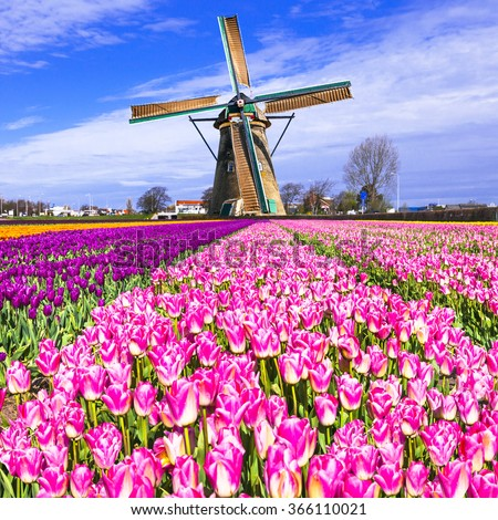 traditional Holland countryside - windmills and tulips - stock photo