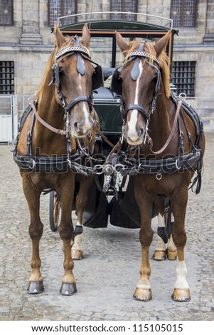 Traditional horse and carriage - stock photo