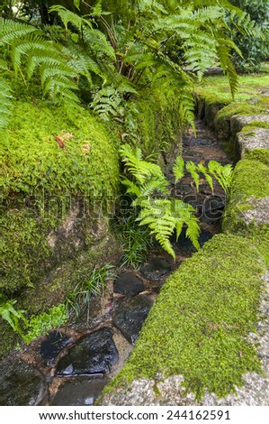 Traditional japanese garden mossy water channel with Asplenium ruprechtii - stock photo