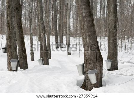 Traditional maple syrup production in Quebec, Canada. - stock photo