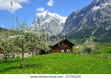 Traditional mountain chalet with fruit trees in flower, snow covered mountains and a paraglider - stock photo