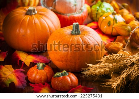 Traditional pumpkins for Thanksgiving and  Halloween in autumn colors - stock photo