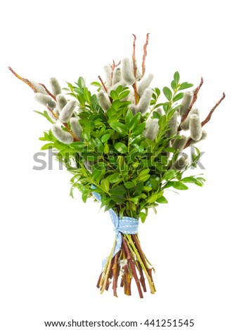 Traditional pussy willow bunch for Palm Sunday - stock photo