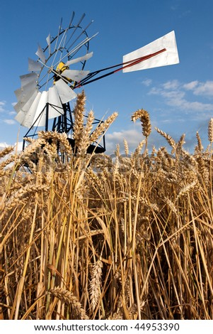 Traditional vaned windmill or wind pump from low viewpoint with ripe crops in foreground. - stock photo