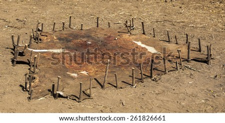 Traditional way of leather treatment. Omorato. Ethiopia. Africa. - stock photo