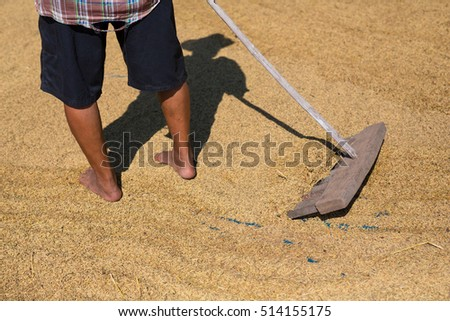 Traditional way to Make Paddy dry, The Social issue in Thailand about rice prices drop and the moisture content of their grains.