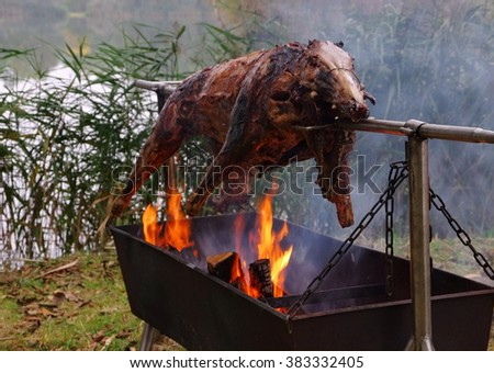 traditional wild boar on spit and wooden fire - stock photo