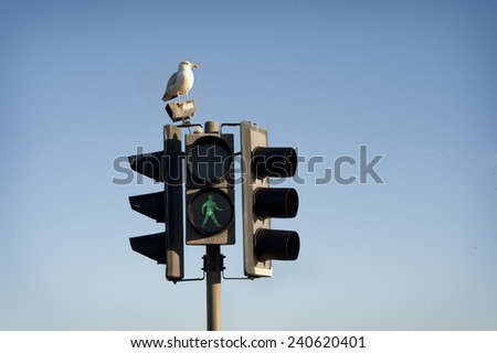 Traffic light in  green and seagull. Blue sky background. - stock photo