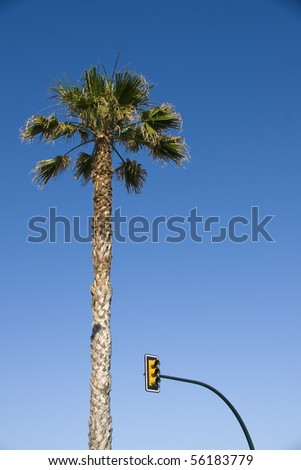 traffic lights and palm tree against the blue sky - stock photo
