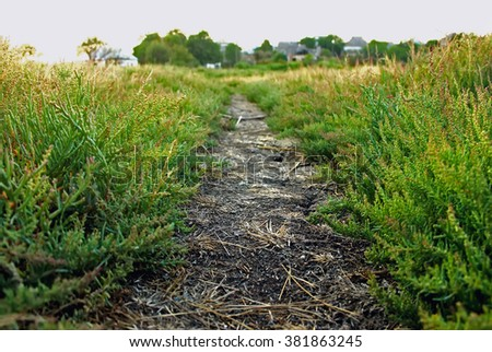 trail, dirt path with grass goes into the distance, very soft focus