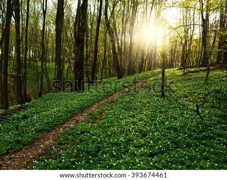 Trail in a flowering green forest leading to the setting sun