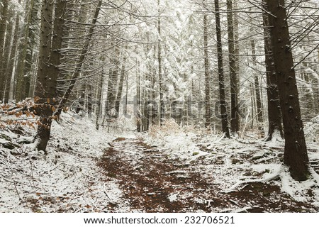 Trail in a forest during winter