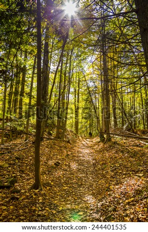 Trail in Autumn Forest Landscape - stock photo