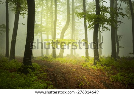 Trail in beautiful misty forest