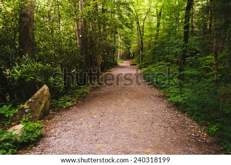 Trail in Great Smoky Mountains National Park, Tennessee. - stock photo