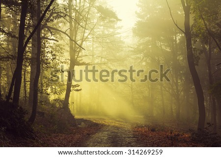 Trail in misty morning light - stock photo