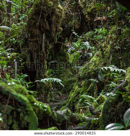 Trail in mossy jungle of Trus Madi mountain in Sabah, Malaysia - stock photo