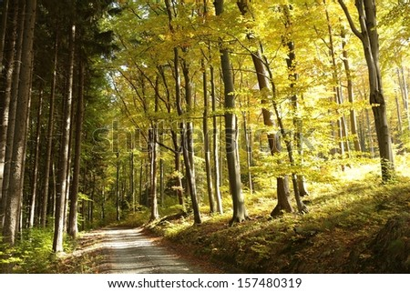 Trail in the autumn woods in the morning. - stock photo