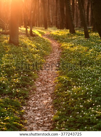 Trail in the blossoming green spring forest, nature background - stock photo
